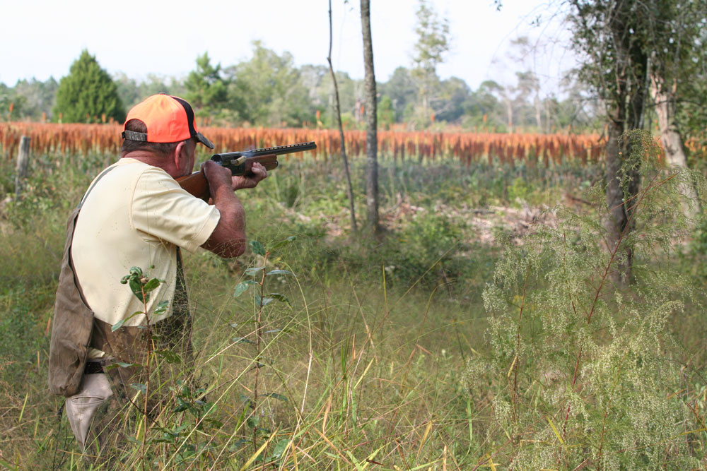 Our eight hunting courses are  Quail Hunting